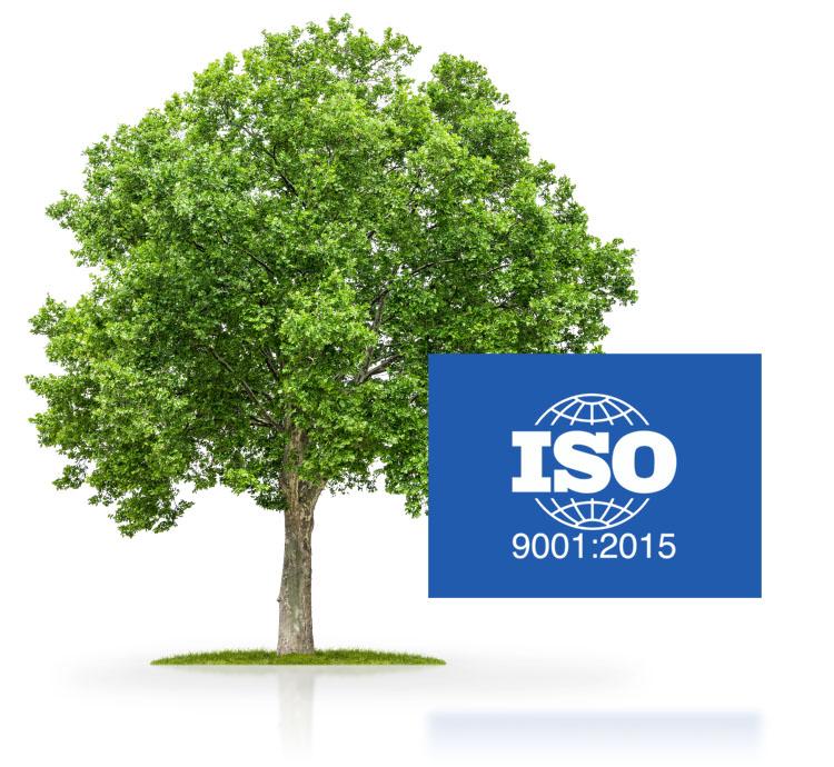 Grüner Baum ISO-Zertifizierung